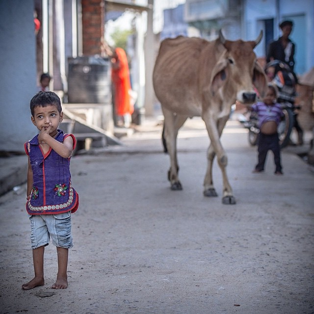 Boy and Bull. I wonder if this little boy knows what's behind him.  Probably! Tordi Village India. April 2015 #india #incredibleindia #nikon #NikonNoFilter #nikon_photography_ #streetphotography