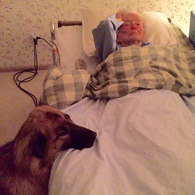 Dogs know. They know who they can jump up on and those who need watching over. For a few years D-man got to spend 2 nights a week looking after Jean who his mom LeAnn  worked tirelessly for as a caregiver. D-man I'm sure brought her some joy and comfort during her last days on earth.