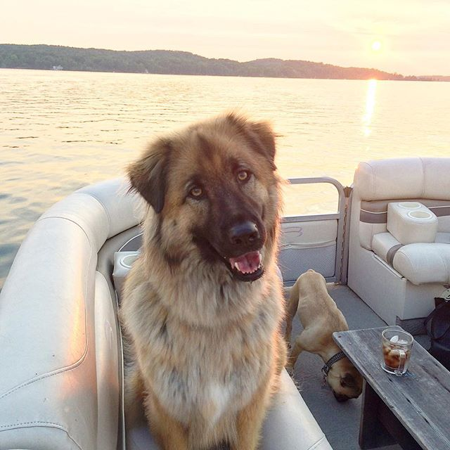 D-man loved being out on the water. Especially on Mark and Sarah's pontoon boat on Walloon. I would give anything for another ride with him.