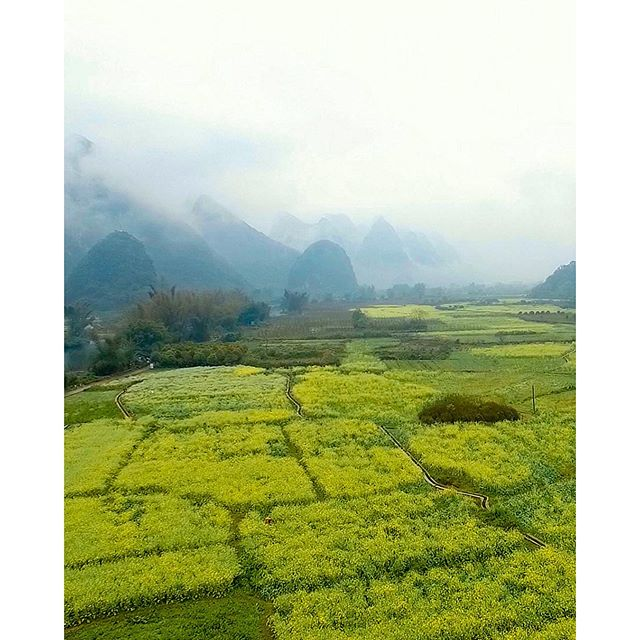 Fields of yellow flyover. Yangshuo, China.