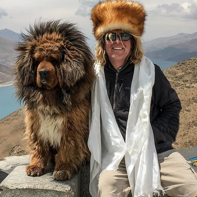 The dogs in the mountains of Tibet are pretty big.